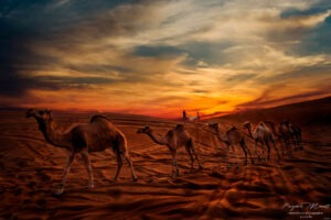 Love Moment in the Dubai desert Pasquale Minniti